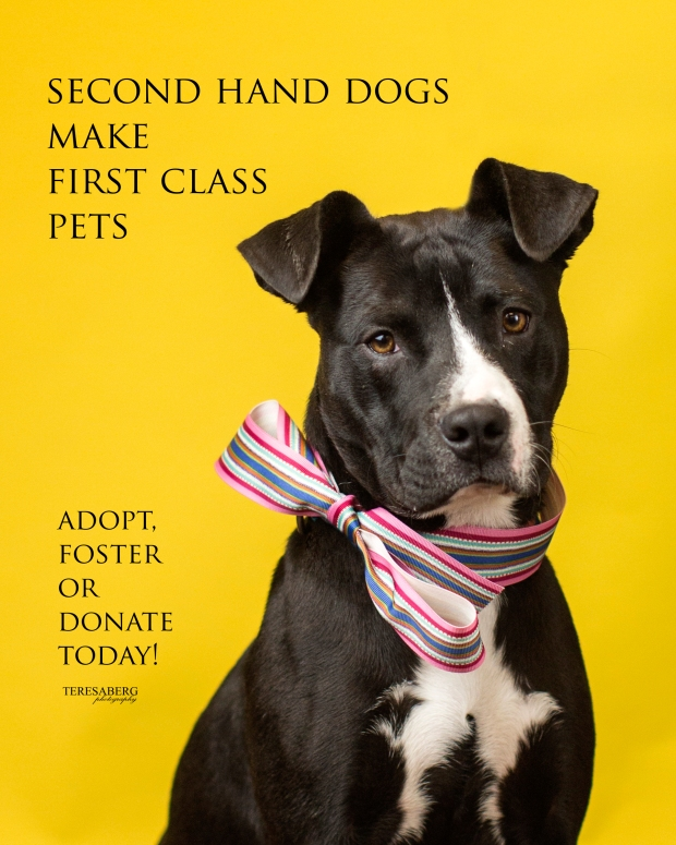 adoption-poster