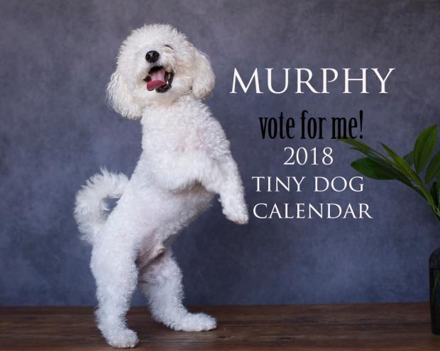 vote murphy