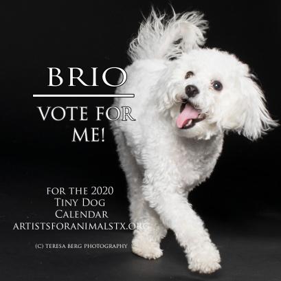 brio vote