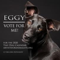 EGGY vote