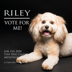 Riley vote - Copy